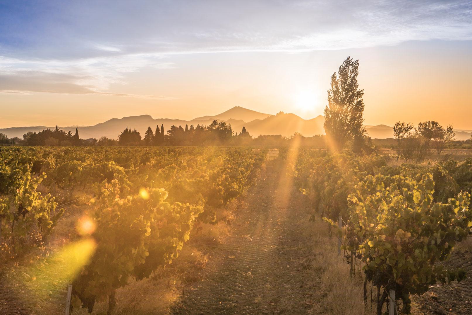 Vignobles du Vaucluse @ Kessler