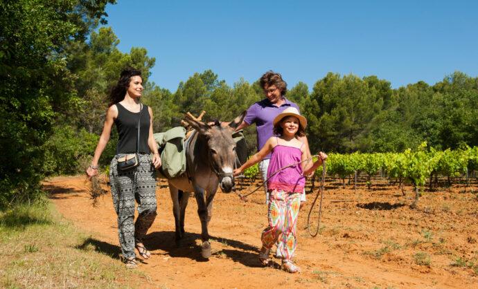 Balade avec les ânes @ Sintas Flores